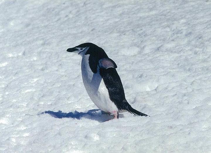 初日の出を南極で迎えたい……眉間にシアわせ
