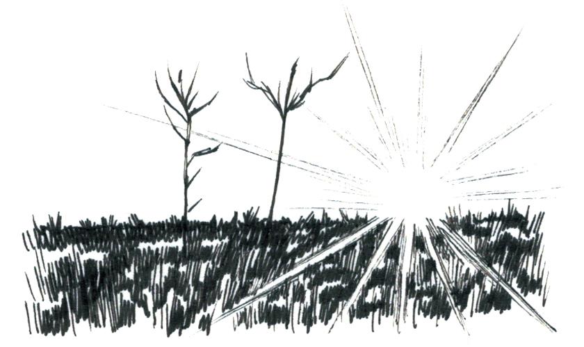 ハワード・ネルソン 太陽光イラスト画