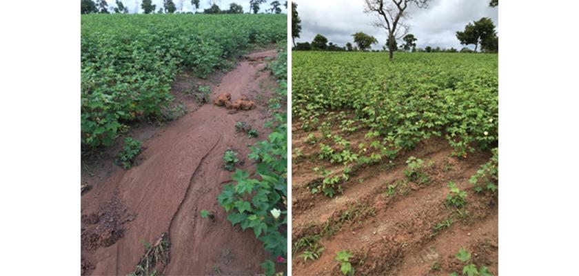 コートジボワールのコットン栽培の土壌