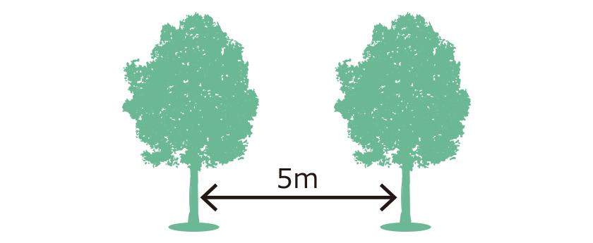 木と木の間隔は約5m